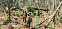 Biodiversité : la production rurale, facteur de dégradation