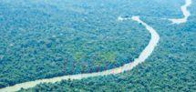 Brésil : de bons points pour l' « Opération Brésil Vert 2 »