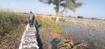 Inondations dans le Logone et Chari : au secours des déplacés