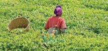 Développement de l'agriculture : comment booster la sécurité alimentaire