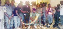 Ambam  : 118 pointes d'ivoire saisies