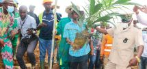 Production de l'huile de palme : une palmeraie moderne créée à Campo