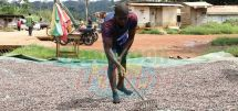 Yaounde-Olama-Kribi Road : Bolster For Ngomedzap's Agricultural Prowess