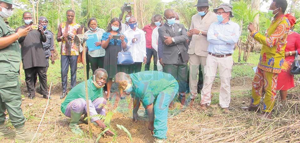 Reforestation : la Lekié veut planter 100 000 arbres