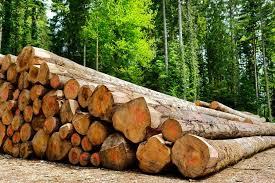 Filière bois : la dématérialisation des procédures à l'export en marche