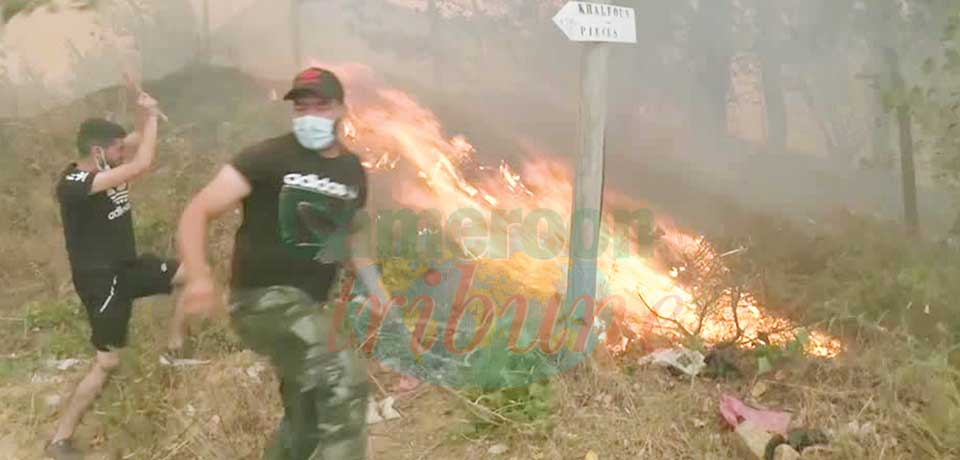 Algeria : Wildfires Leave At Least 65 Dead