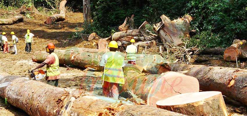 Exploitation forestière : le secteur se remobilise