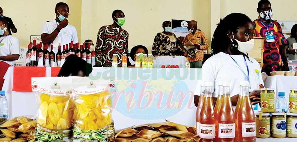 Entreprenariat jeune : la carte du Forum Sanaga Mapubi