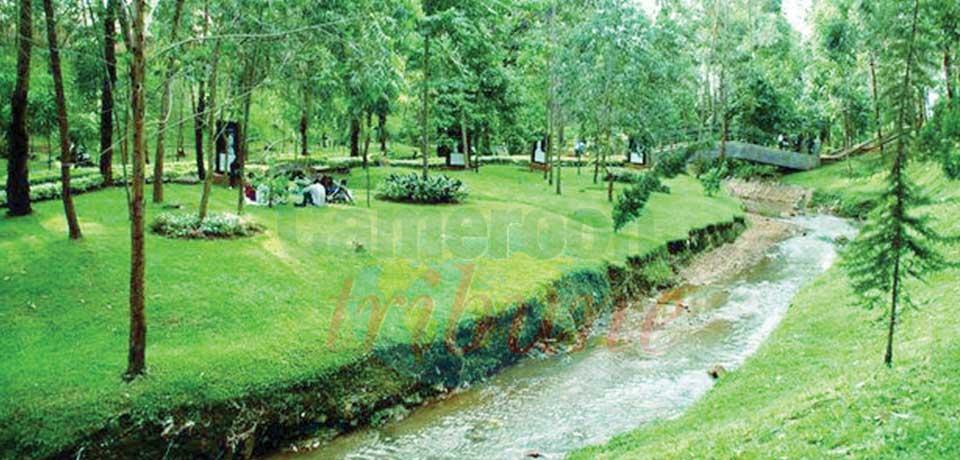 Bois Sainte Anastasie subit les effets de la pandémie de Covid-19.