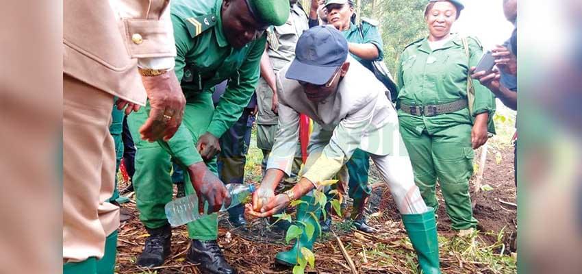 Distribution de l'électricité : Bafoussam va fournir des poteaux en bois