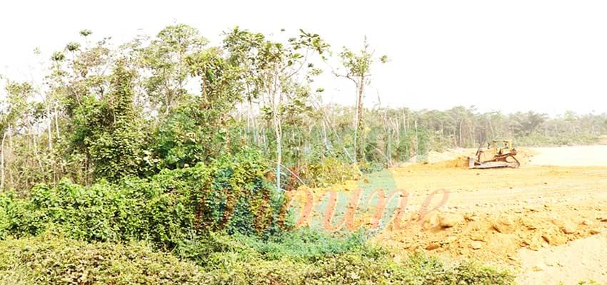 Dibamba : forte pression sur les marécages