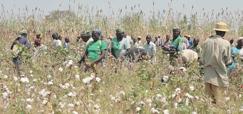 Diversification de l'économie africaine : on compte sur le monde rural