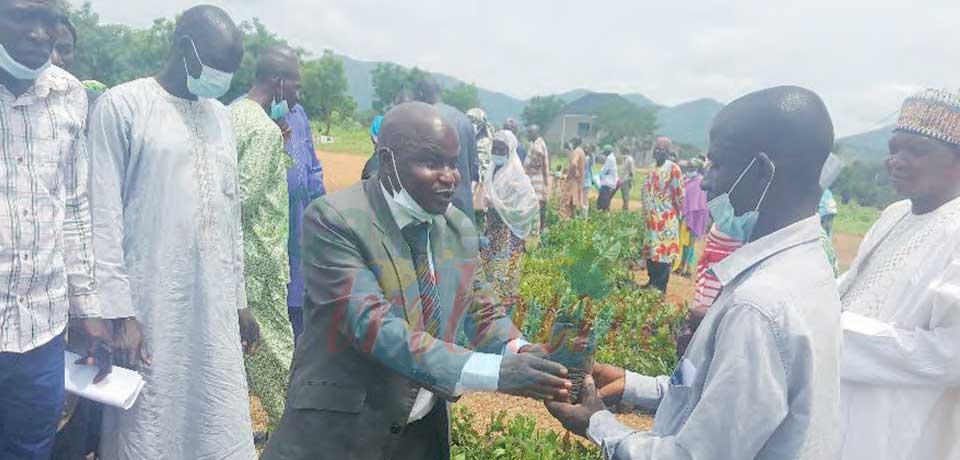 Culture d'anacardier et acacia Sénégal  : 80 000 plants offerts aux paysans