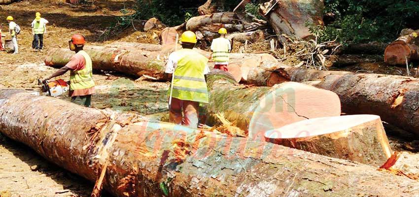 Recettes forestières : 100 milliards de F en deux ans