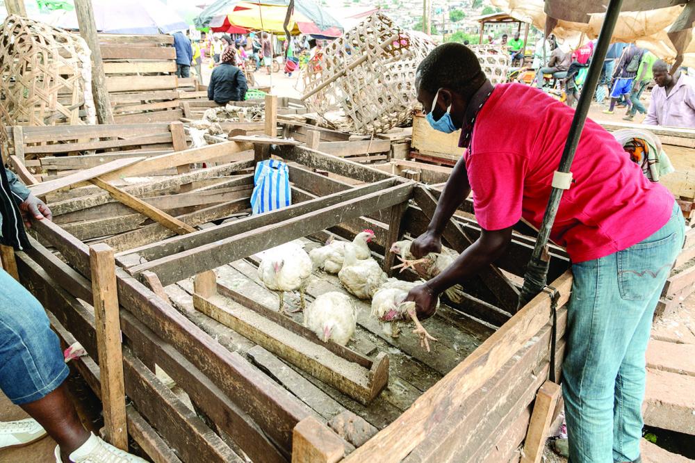 Poulets : les prix à la hausse