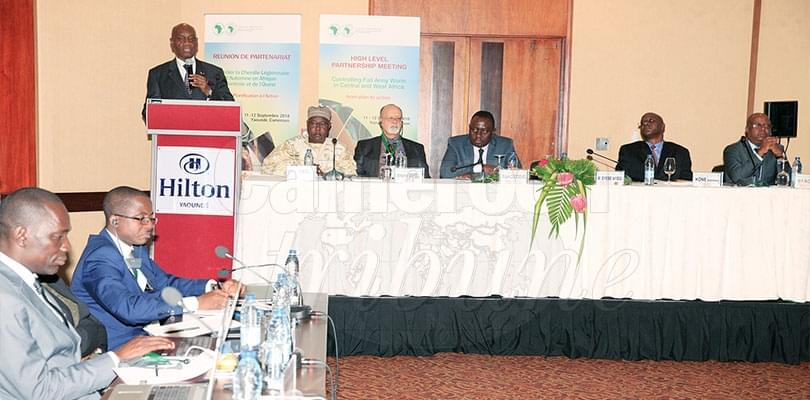Fall Army Worm: African Development Bank Pushes Regional Action