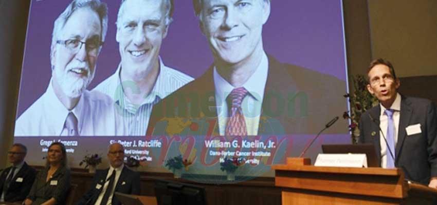 Prix Nobel de médecine 2019 : les lauréats sont connus