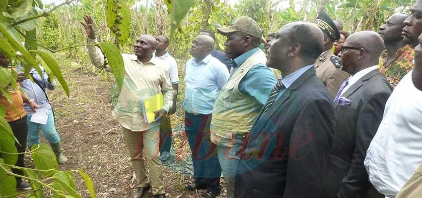 Moungo : MINADER Visits Agricultural Projects