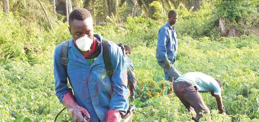 Entreprenariat agricole : en quête de terrains