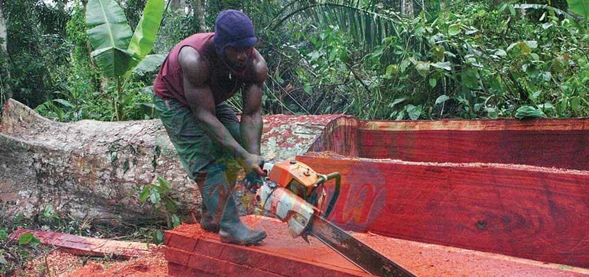 Exploitation forestière : 15 entreprises suspendues