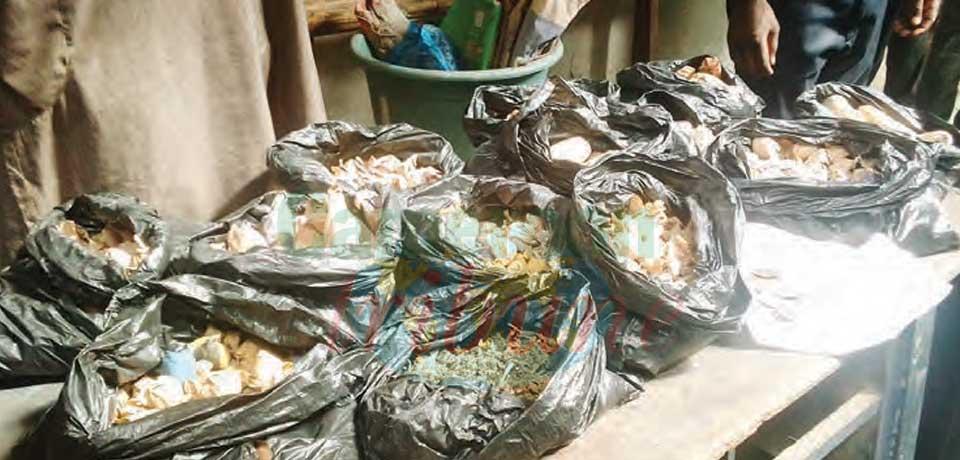 Bonabéri : près de 1500 filons de cannabis saisis