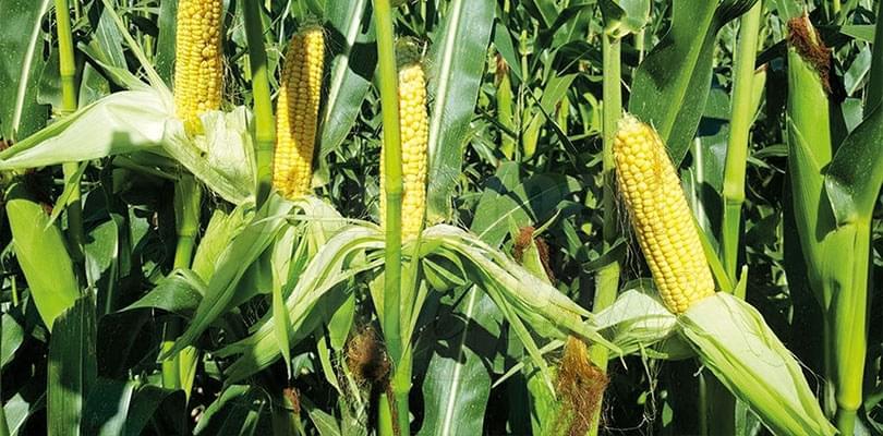 Mutation des exploitations individuelles agricoles: la voie royale de la coopérative