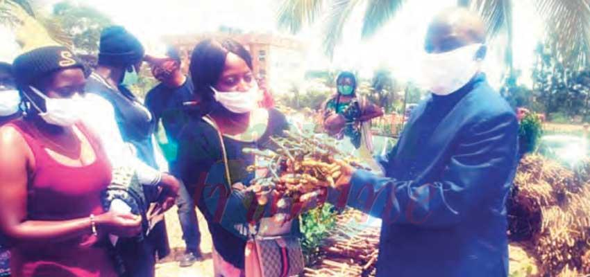 Agric In North West : Thousands Plantlets, Cassava Cuttings To Boost Yields