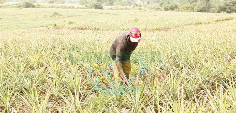 Avoir la bonne information à temps peut aider à orienter les agriculteurs.