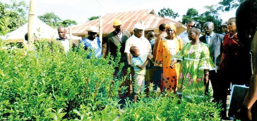Centre : 5000 plants d'arbres fruitiers offerts