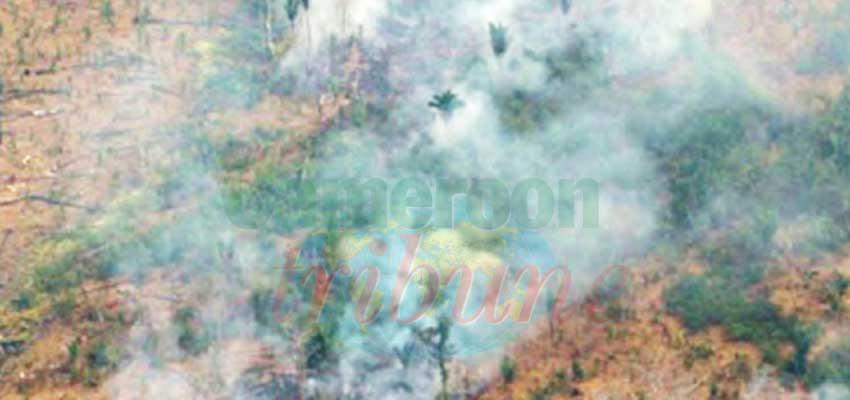 Protection de l'Amazonie : l'opération Brésil Vert 2 lancée
