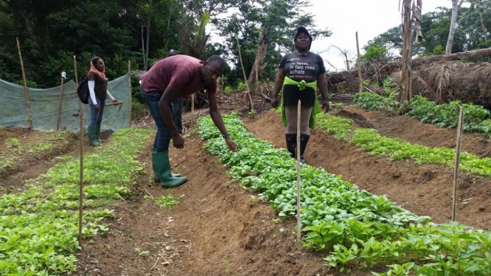 The project is transforming lives around the Dja Biosphere Reserve.