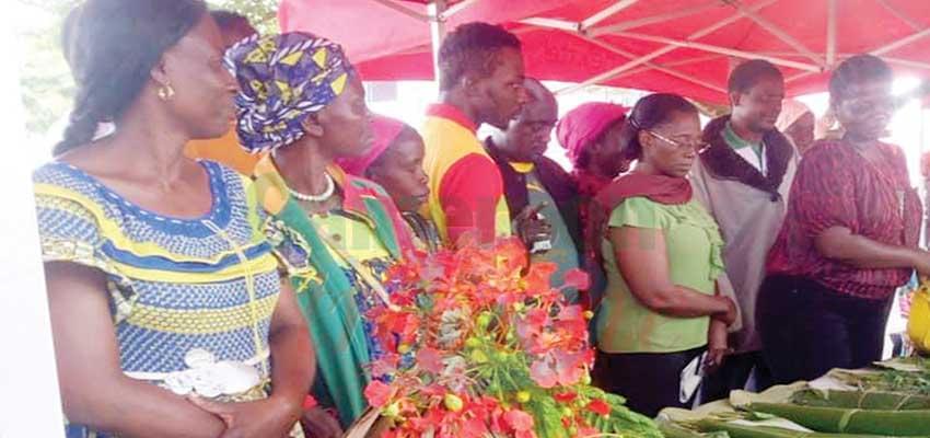 Filière manioc : les femmes encouragées