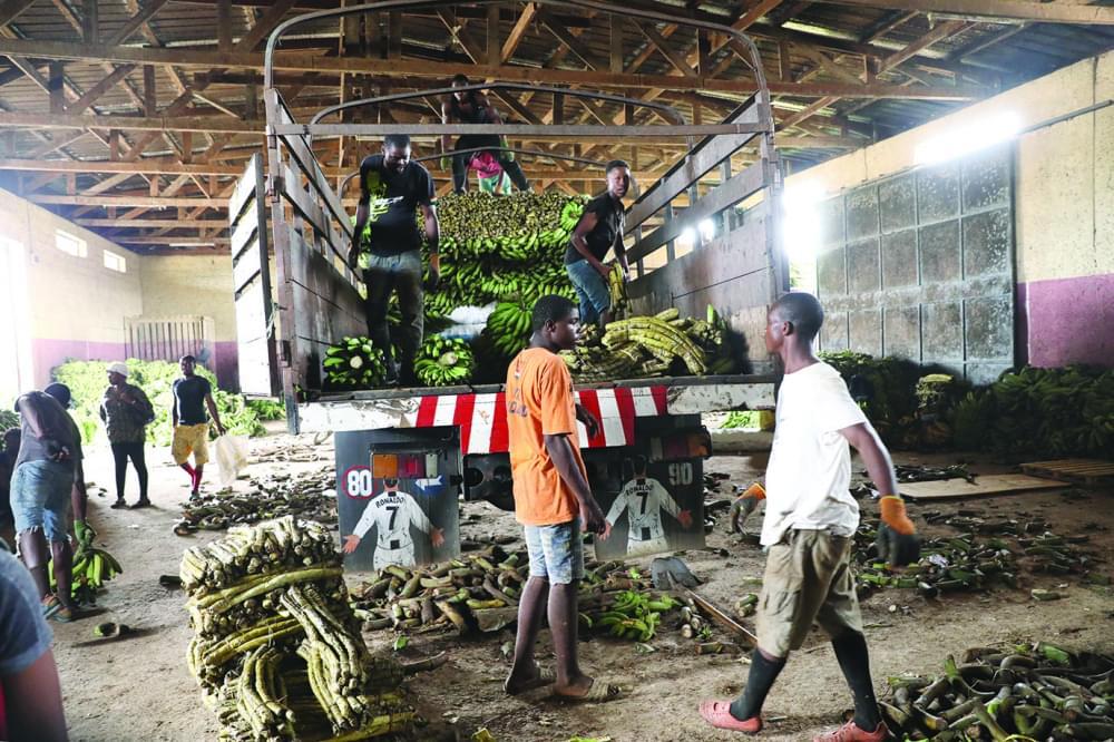 Abang Minko'o : le marché mondial au petit trot