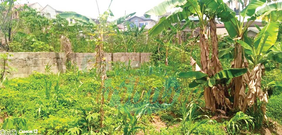 Urban Agriculture On The Rise