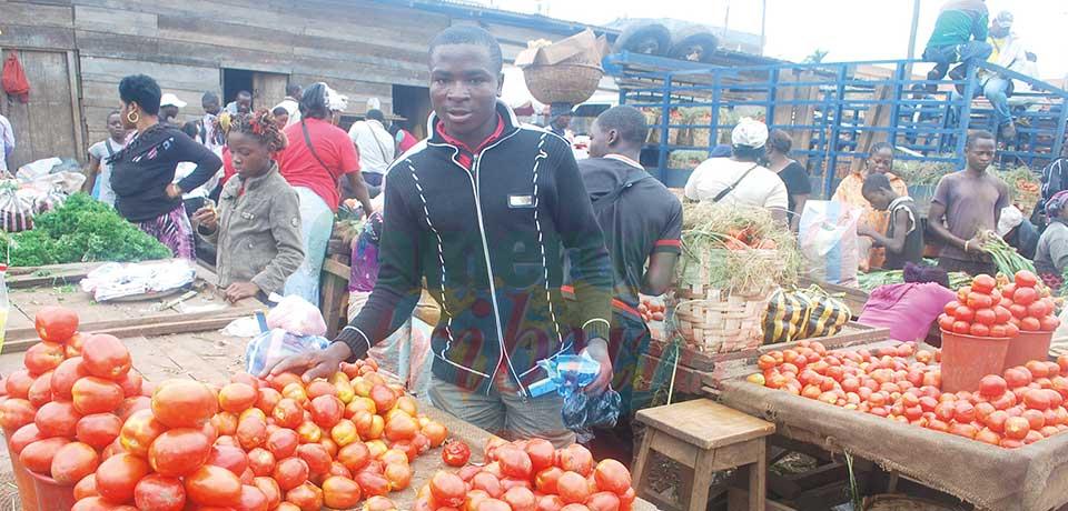 Le prix de la tomate en perpétuelle variation sur le marché.