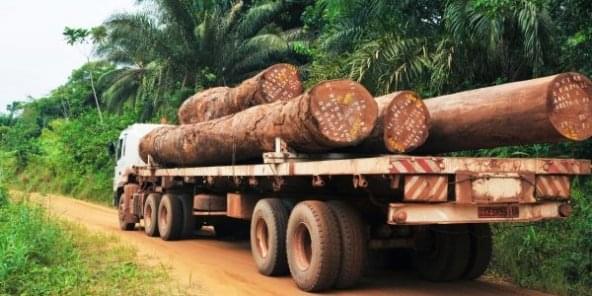 Transformation du bois camerounais : l'Egypte intéressée