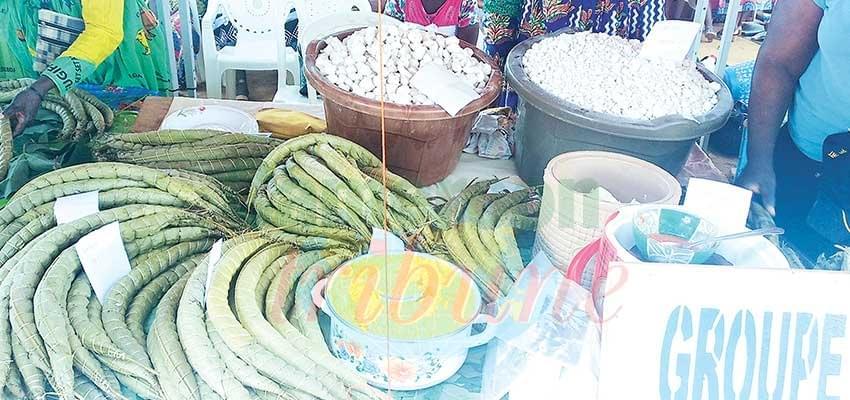 Transformation du manioc: vers un bâton standard