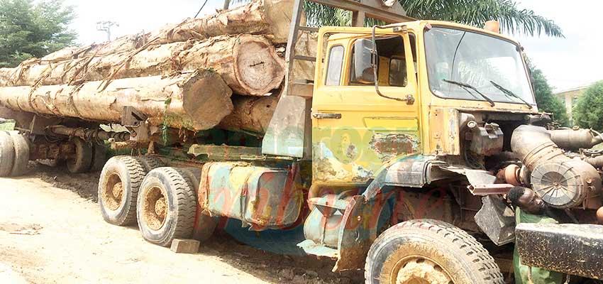 Exportations de bois : le dispositif de contrôle renforcé