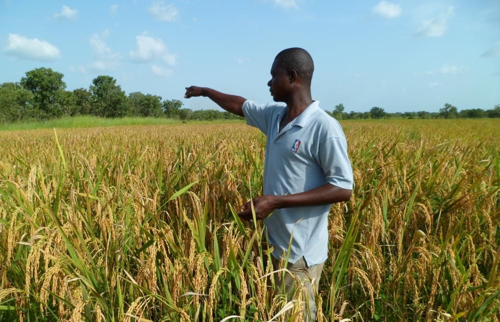 Image : Développement de l'agriculture: les jeunes, une pièce maîtresse