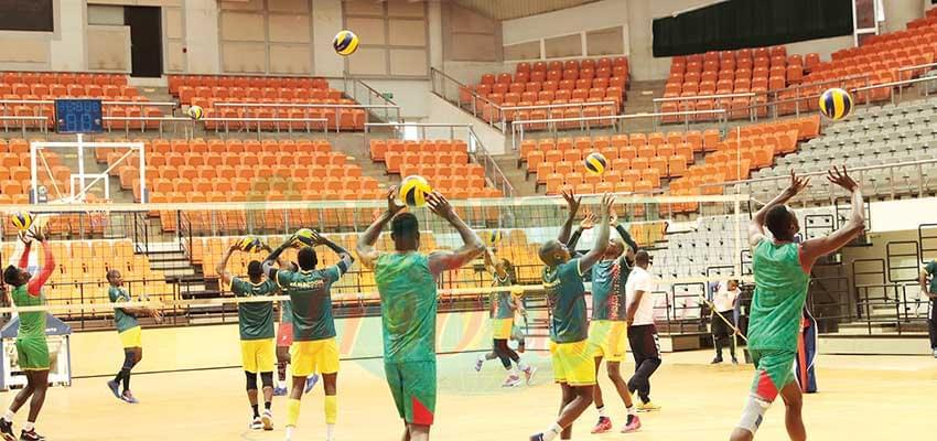 Volley-ball Messieurs : les Lions en route pour Bari