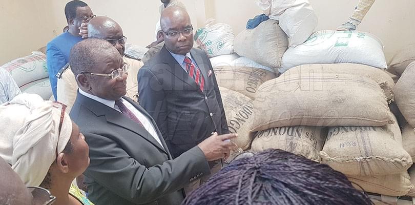 Image : Commercialisation du cacao: les ventes groupées se poursuivent