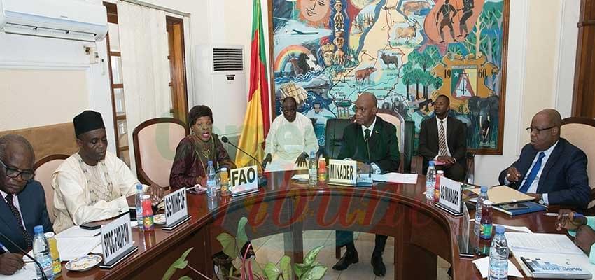 Image : Coopération Cameroun-FAO: les projets à financer en examin