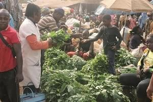 Image : Journée mondiale de l'alimentation: le Cameroun n'aura pas faim
