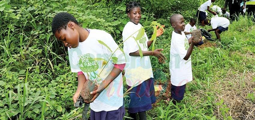 Image : Changements climatiques: 200 arbres plantés à Mbalmayo
