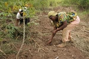 Image : Agriculture: les femmes veulent gagner du terrain