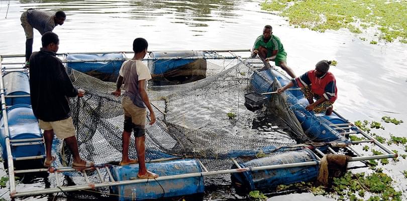 Image : Aquaculture; la production en hausse