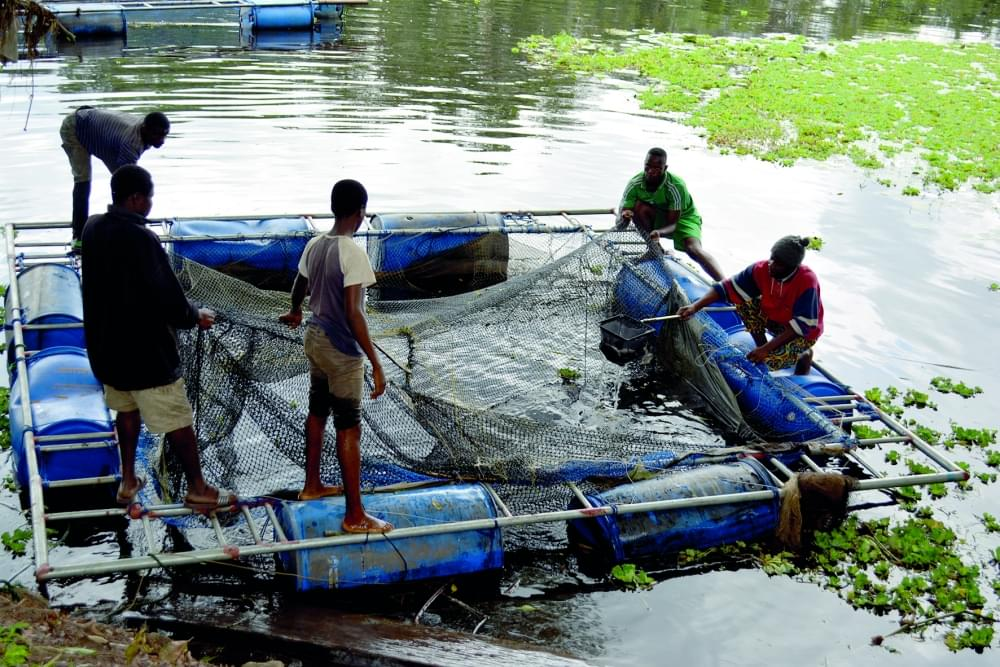 Image : Aquaculture: la production en hausse