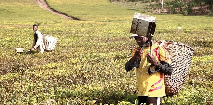 Image : Modernisation de l'agriculture: il est temps de semer