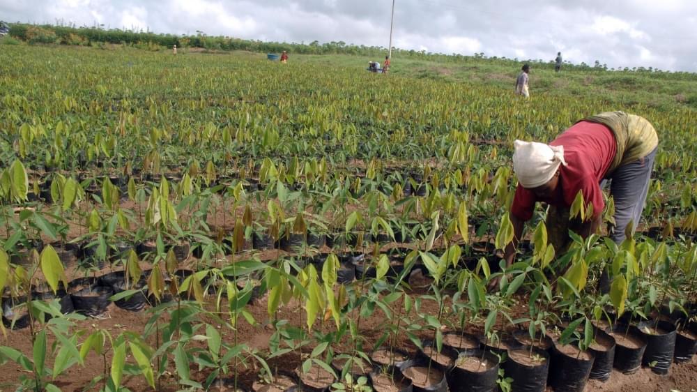 Agriculture: les femmes veulent gagner du terrain