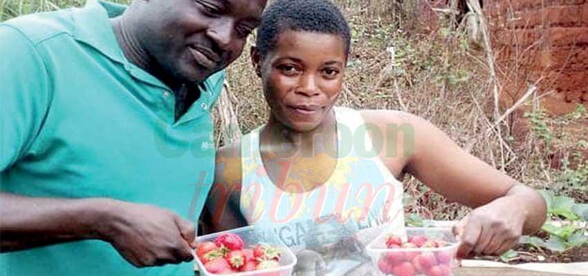 Emmanuel Fongang : le pari de la fraise